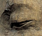 A MONUMENTAL STONE HEAD OF BUDDHA