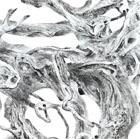 Zeng Xiaojun (b.1954) TANGLED ROOTS